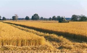 ctr-lombardia-su-ici-terreni-agricoli.jpg