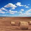 imprenditore agricolo professionale - IAP