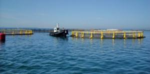 impianto_itticoltura