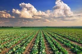 imu-2014-sui-terreni-agricoli-proroga-versamenti-ufficiale.jpg