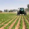 Agevolazioni ICI  (e IMU) sui terreni agricoli: la Cassazione alterna l'orientamento sulla società agricole